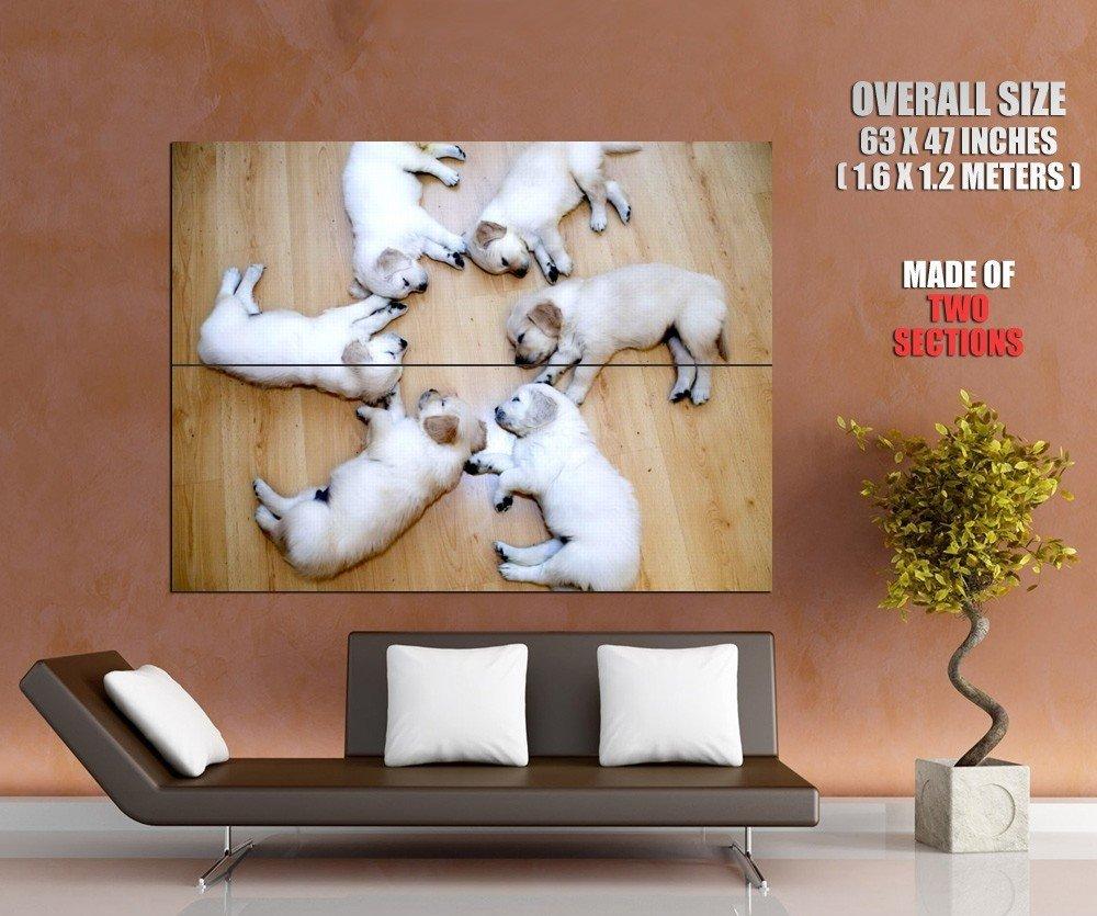 White Sleeping Labrador Retriever Puppies Huge Giant Print Poster