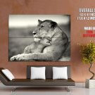 Mother Lion Baby Bw Wild Cat Animal Huge Giant Print Poster
