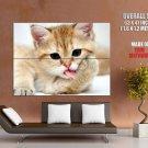 Nice Kitty Licking Paw Cat Animal Huge Giant Print Poster