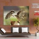 Sparrow Catching Beak Animal HUGE GIANT Print Poster