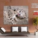Leopard Panther Love Animal Cute Cats HUGE GIANT Print Poster
