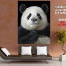 Cute Panda Animal Huge Giant Print Poster