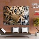 Cute Tiger Wild Cat Animal Huge Giant Print Poster