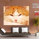 Ginger Cat Animal Huge Giant Print Poster