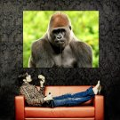 Gorilla Ape Primate Nature Animals Huge 47x35 Print POSTER
