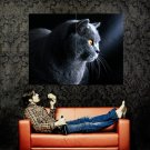 Strong Handsome Cat Animal Huge 47x35 Print POSTER