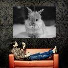 Small Cute Dwarf Rabbit BW Animal Huge 47x35 Print Poster