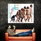 Homosapien Evolution Tree Science Huge 47x35 Print Poster