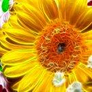 Fractal Flowers Amazing Art 32x24 Print Poster
