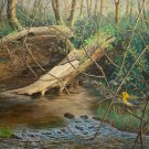 Sandy Run Creek - OAPF211