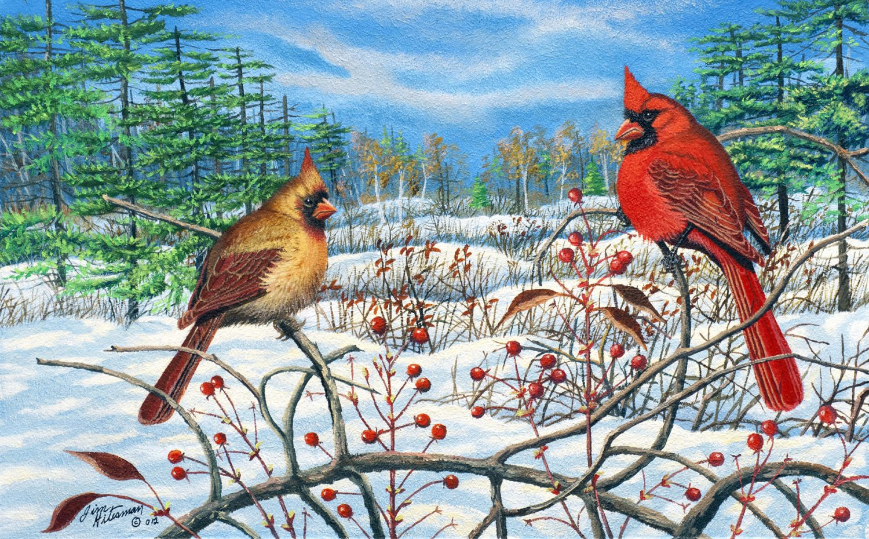 Winter Berry - Cardinals Item CP149
