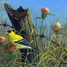 Bull Thistle - Gold Finch - CP143