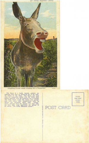 """LN PC--Humorous """"Laughing"""" Burro of the ROCKY MOUNTAINS #PC29"""