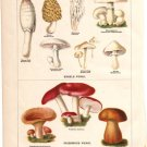 """Edible Fungi"" and ""Poisonous Fungi"" Color Plate,  BP20"