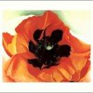 Georgia O'Keeffe Poppy Needlepoint Design by Lena Lawson (ok-50)