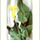 Georgia O'Keeffe Yellow Calla with Green Leaves Needlepoint Design by Lena Lawson (ok-74)