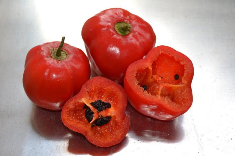 ROCOTO CHILI PEPPER  10+ seeds - FRESH (Capsicum pubescens)