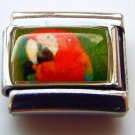 Scarlet macaw face photo 9mm stainless steel italian charm bracelet link 01 new