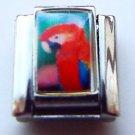 Scarlet macaw parrot photo 9mm stainless steel italian charm bracelet link  new