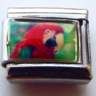 Scarlet macaw face photo 9mm stainless steel italian charm bracelet link new