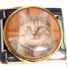 Tabby cat round photo 9mm stainless steel italian charm bracelet link new