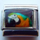 Blue and gold macaw face photo 9mm stainless steel italian charm bracelet link
