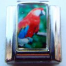 Scarlet macaw stand photo 9mm stainless steel italian charm bracelet link new