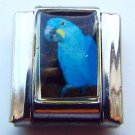 Hyacinth macaw parrot photo 9mm stainless steel italian charm bracelet link new