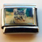 Tabby cat face look photo 9mm stainless steel italian charm bracelet link new