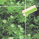 PAMPHLET - Arashi - Aiba Masaki - Green Fingers