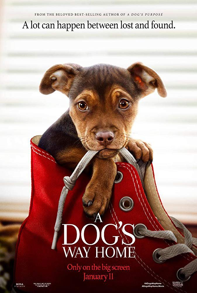 A Dogs Way Home (2019) Digital Copy Backup-DVD+Download