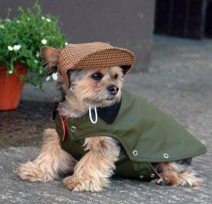 Snazzbour Raincoat / dog clothes