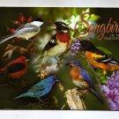 "POSTCARD - ""Songbirds of the Northwoods"""