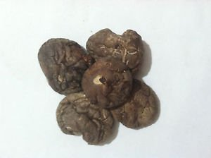 1 oz. Shitake Mushroom (Lentinus edodes) Organic & Kosher