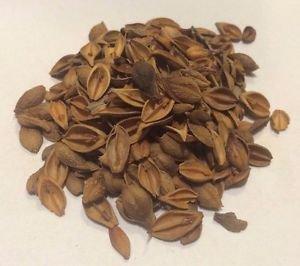 1 oz. Forsythia Fruit Lian Qiao (Forsythia suspensa) Organic & Kosher China