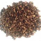 500 grams Celastrus Paniculatus Seeds Wildharvested India