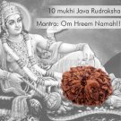 10 Mukhi Java Rudraksha Online Store in USA/UK/Europe