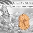 19 mukhi Java rudraksha Buy Online in USA/UK/Europe