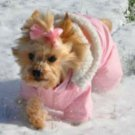 DOG COAT chihuahua teacup yorkie maltese DESIGNER DOG SNOW SUIT COAT PARKA