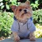 DOG SWEAT SHIRT chihuahua teacup yorkie GREY DOG HOODIE JUMPER clothes SHIPS USA