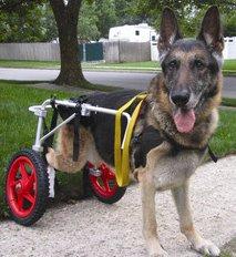 BEST FRIEND MOBILITY DOG WHEELCHAIR LARGE ALUMINUM LIGHTWEIGHT CART