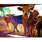 2000-Now 4 Cows Photo Wall Picture 8x12 Color Art Print - Farm Animals Small