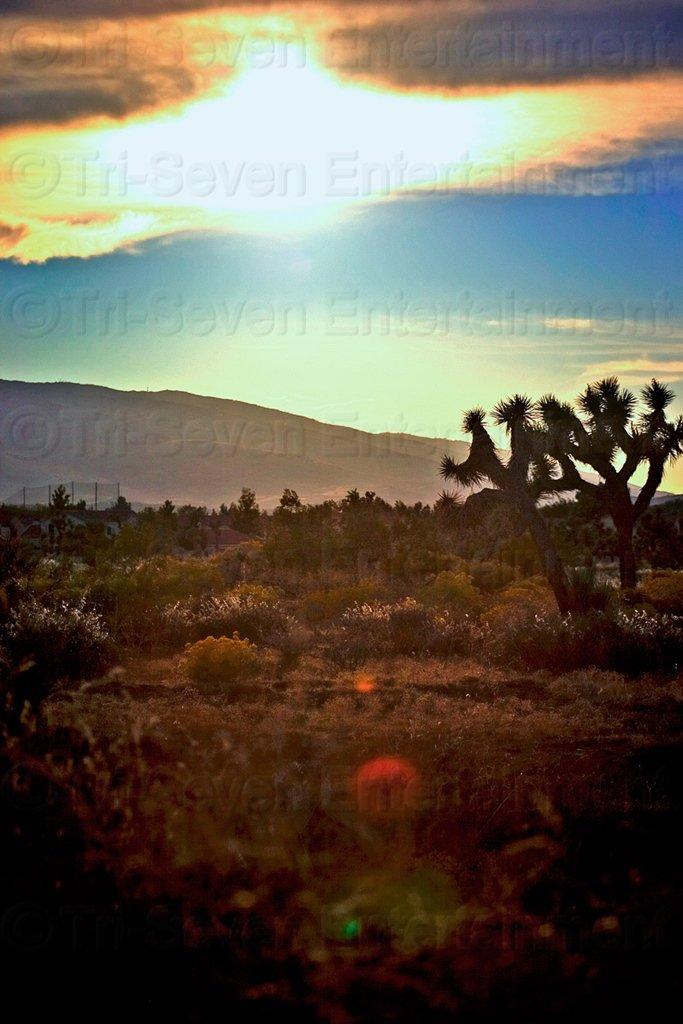 Mojave Desert 8x12 Sun Photo Wall Art Print Color Original California Picture