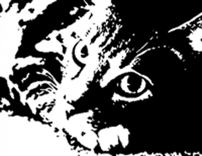 "16"" x 20""  Pretty Kitty Acrylic Pop Art Painting with COA"