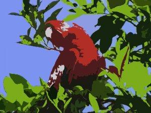 The Parrot Acrylic Pop Art Painting