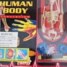 Human Body Kit Fun Station Lab Science Health Bones Skeleton Experiment Stickers