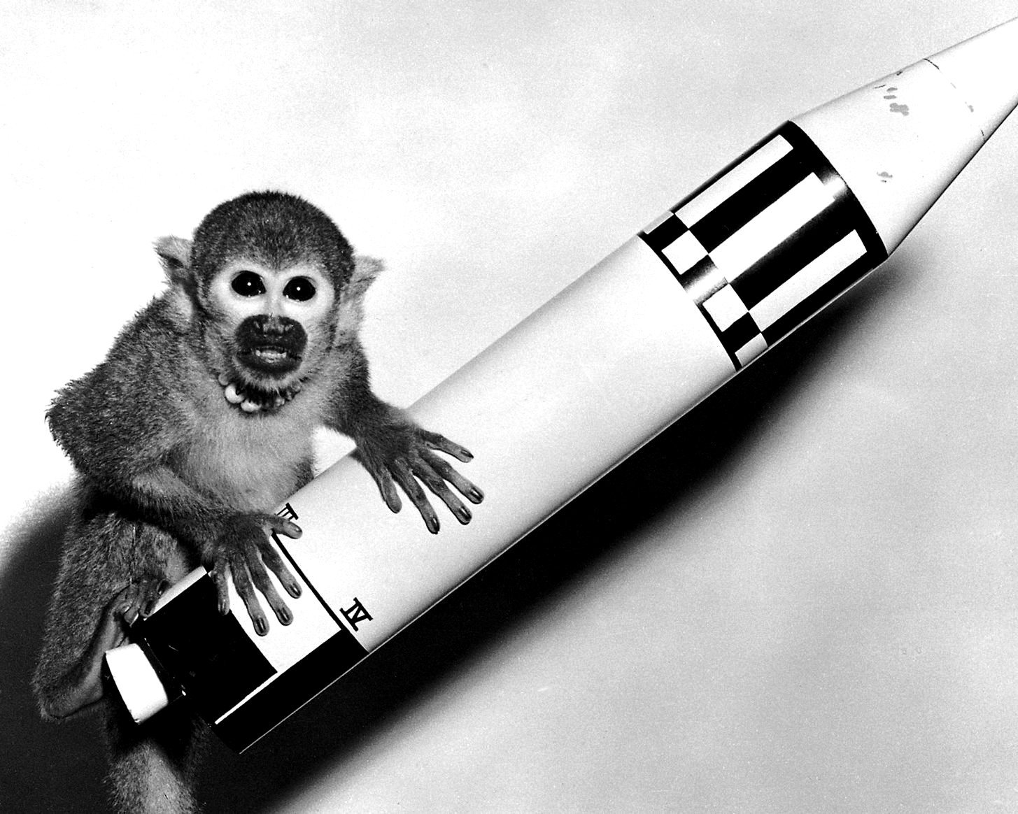 "MONKEY ""MISS BAKER"" WITH A MODEL JUPITER VEHICLE - 8X10 NASA PHOTO (BB-115)"