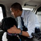 "BARACK OBAMA & PET DOG ""BO"" IN PRESIDENTIAL LIMO ""THE BEAST"" 8X10 PHOTO (ZY-377)"