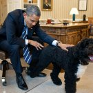 "BARACK OBAMA PETS FAMILY DOG ""BO"" IN THE OVAL OFFICE - 8X10 PHOTO (ZY-638)"