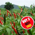 50-Chilli Pepper Seeds Thai Birds Eye Spicy Extremely Hot Cooking Organic (#B 3 G 1 Free)